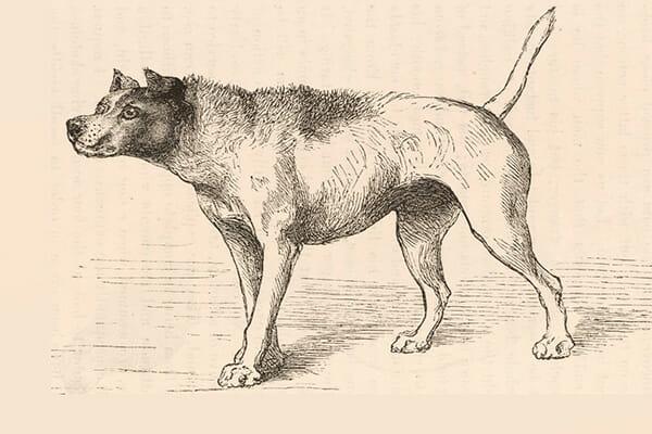 Darwin's dog